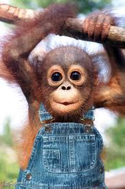 Another Well Dressed Orangutan